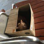 Cat in Daisen Park
